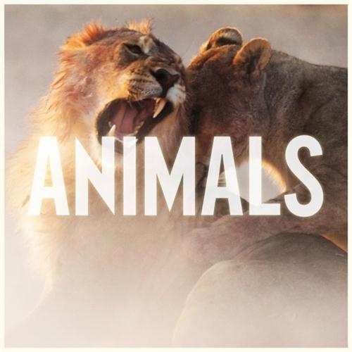Maroon 5, Animals, Piano, Vocal & Guitar (Right-Hand Melody)