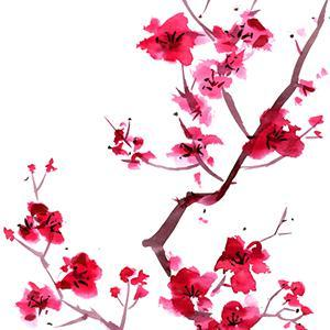 Audrey Snyder Sakura (Cherry Blossoms) profile image