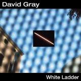 David Gray White Ladder Sheet Music and PDF music score - SKU 19123