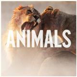 Maroon 5 Animals Sheet Music and PDF music score - SKU 119676